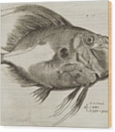 Vintage Fish Print Wood Print