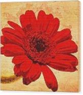 Vintage Gerbera Daisy Wood Print