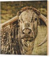 Vintage Longhorn Cattle Wood Print
