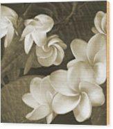 Vintage Plumeria Wood Print