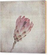 Vintage Protea Flower Wood Print