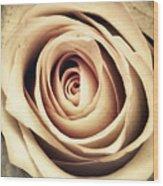 Vintage Rose Wood Print by Wim Lanclus