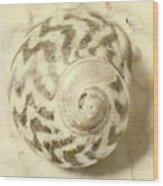 Vintage Seashell Still Life Wood Print