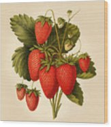 Vintage Strawberries Wood Print