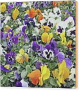 Viola In The Spring Are Especially Beautiful. Wood Print