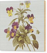 Viola Tricolour  Wood Print by Pierre Joseph Redoute