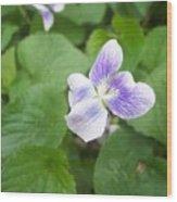 Violet 1 Wood Print