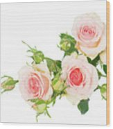 Garden Roses And Buds Wood Print