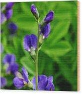 Violet Blue Wood Print