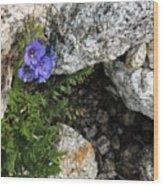 Violet Climbing  Wood Print