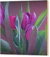 Violet Colored Tulips Wood Print