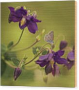 Violet Columbines Wood Print