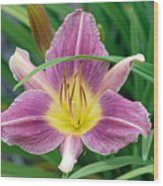 Violet Day Lily Wood Print