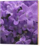 Violet Dream IIi Wood Print