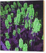 Violet Dream On Green Wood Print