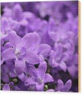 Violet Dream V Wood Print