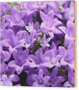 Violet Dream Vii Wood Print