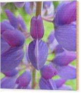 Violet Lupin Wood Print