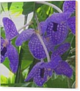 Violet Orchid Trio Wood Print