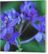 Violet Orchids Wood Print