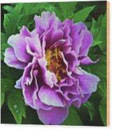 Violet Peony Wood Print