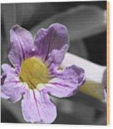 Violet Trumpet Vine Selective Color Wood Print