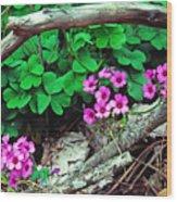 Violet Wood Sorrel Wood Print