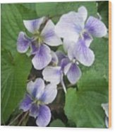Violets 2 Wood Print by Anna Villarreal Garbis