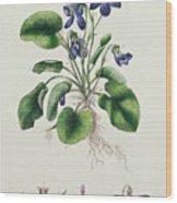 Violets Wood Print