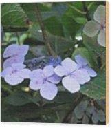 Violets O The Green Wood Print