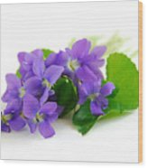 Violets On White Background Wood Print