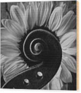 Violin Scroll And Sunflower In Black And White Wood Print