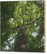 Virgin Canopy Wood Print