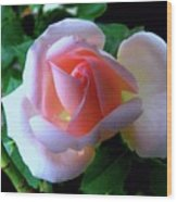 Virgin Pink Rose With Thorns Wood Print