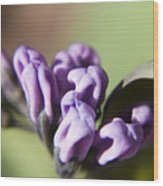 Virginia Bluebell Buds Wood Print