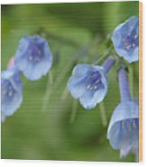 Virginia Bluebells I Wood Print