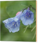 Virginia Bluebells II Wood Print