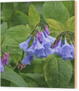 Virginia Bluebells Wood Print