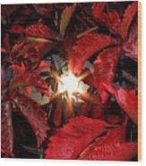 Virginia Creeper Sunburst 2 Wood Print