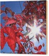 Virginia Creeper Sunburst Wood Print