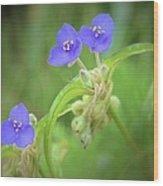 Virginia Spiderwort Wood Print