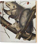 Virginian Opossum Wood Print by John James Audubon