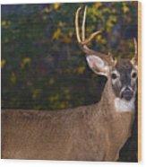 Virginian White Tail Buck Wood Print