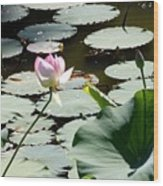 Visit To Lilly Pond Wood Print