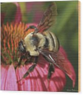 Visitor Up Close Coneflower  Wood Print