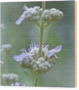 Vitex Cannabinifolia Wood Print