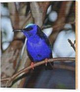 Vivid Blue Wood Print