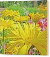 Vivid Colorful Yellow Daisy Flowers Daisies Baslee Troutman Wood Print