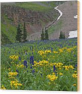 Vivid Colors Of The Colorado Alpine Wood Print