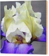 Vivid Iris 6622 H_3 Wood Print